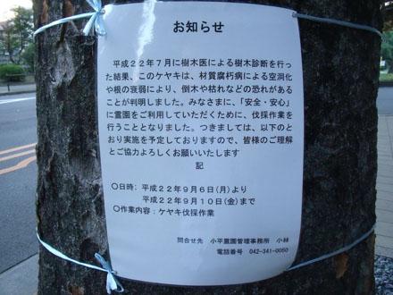 昨年、小平霊園で見かけた伐採の告知