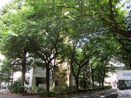 葉が生い茂り、木陰ができている