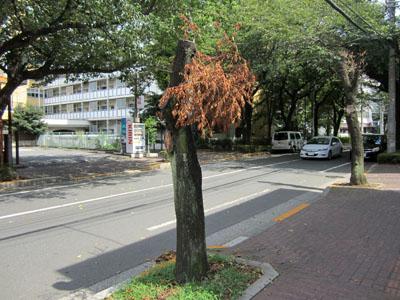 真ん中の木も枯れている