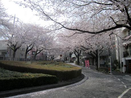 久米川駅南口の桜通り
