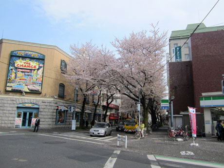 今年も見事な桜のトンネルができている
