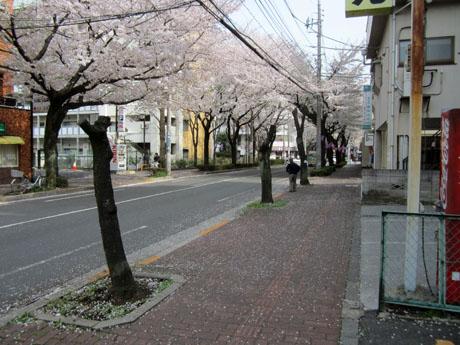 剪定から2回目の春。今年も花は咲かなかった