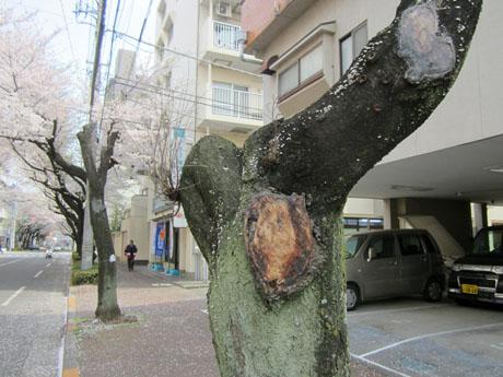 少しだけ出ていた枝は、今はもうすっかり枯れている