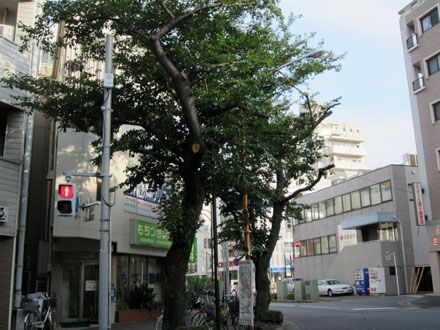 道路に向かって伸びていた枝が切られている