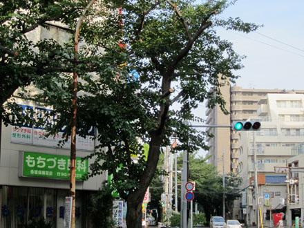 その隣の桜も道路に伸びている枝が切られている