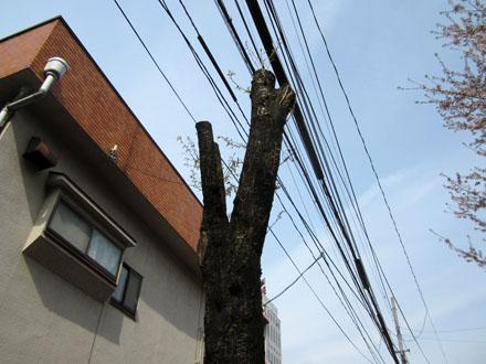 これは少し枝が伸びている