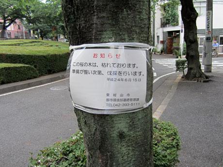 ある桜の幹にあった貼り紙