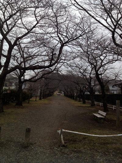 春にはキレイな桜のトンネルができるんだろうなぁ