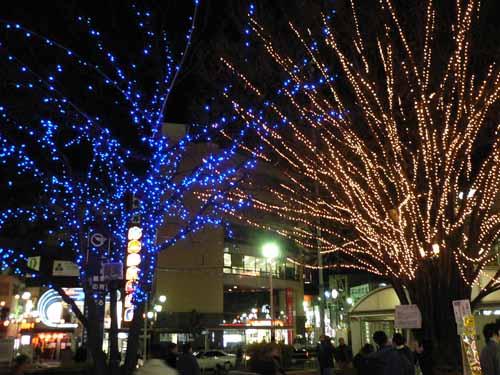 久米川駅南口にあるライトアップされたけやき