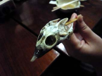 スッポンの頭蓋骨
